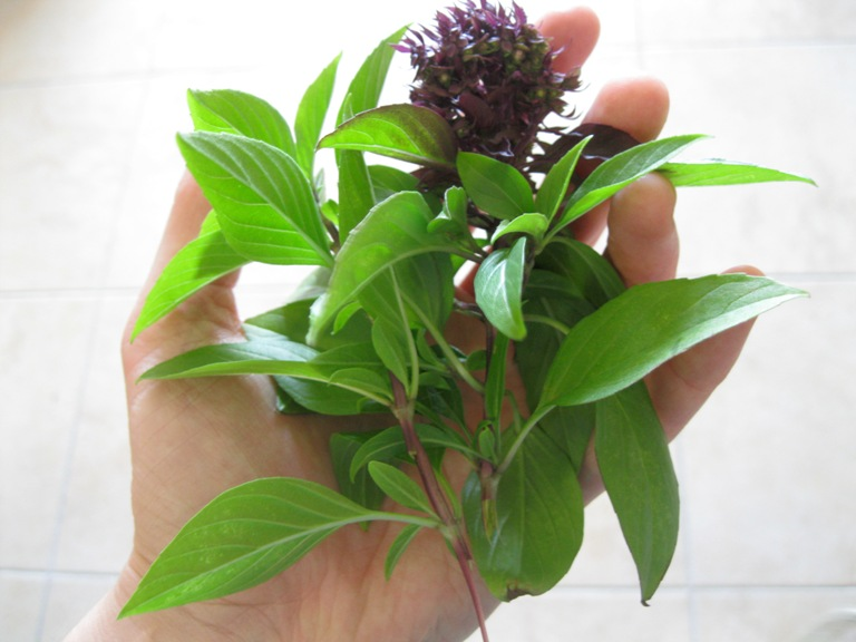 Thai Basil - Thai Food Ingredient